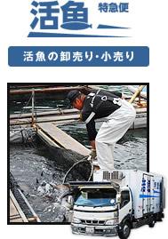 活魚の卸売り・小売り 活魚特急便